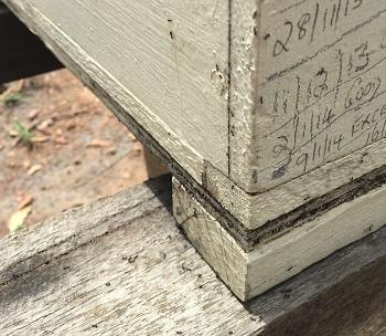 ants love honey image