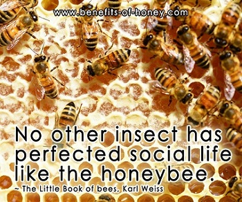 bee social life poster image