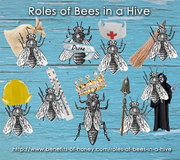 roles of bees in a hive poster image