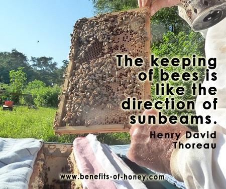 beekeeper image