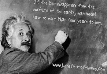 bee quotes graphic