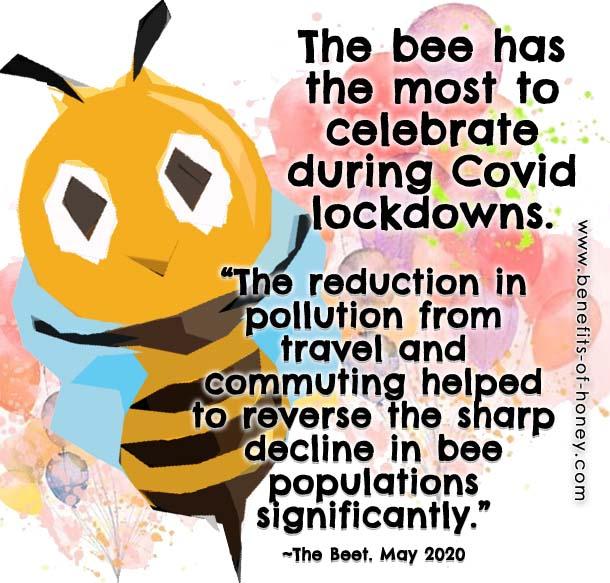 bees make a comeback image