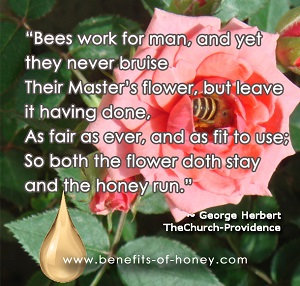 bee quotes image
