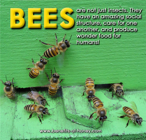 honey bees poster image