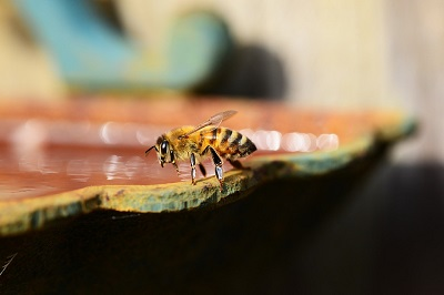 can bees turn sugar into honey image