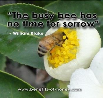 honeybee poster image