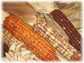sweet corn image