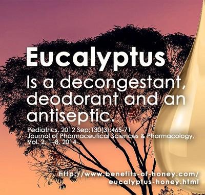 eucalyptus honey image