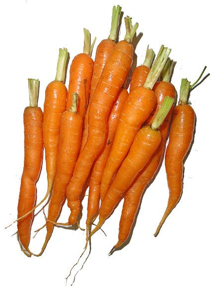 raw food diet image