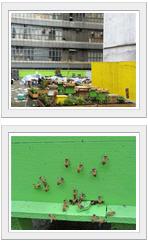 hk farm image