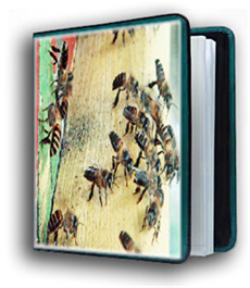 honey bees images image