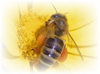 honey floral varieties image