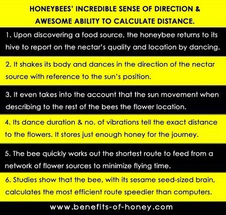 honeybee dance poster image