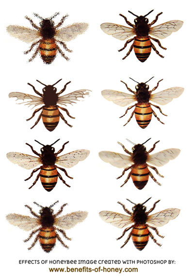'honeybee poster image' from the web at 'http://www.benefits-of-honey.com/image-files/honeybee-effects-poster.jpg'