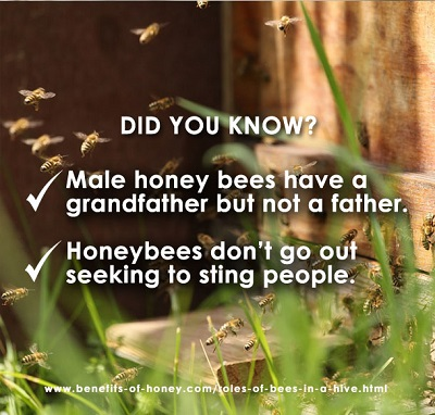 honeybee facts did you know poster image