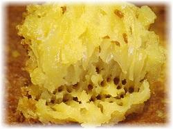 honeycombs ambon image