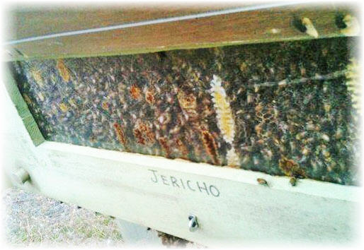 bee keeping image