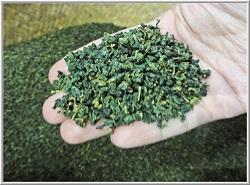 oolong tea imagee
