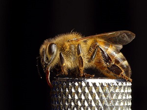 bee pictures image