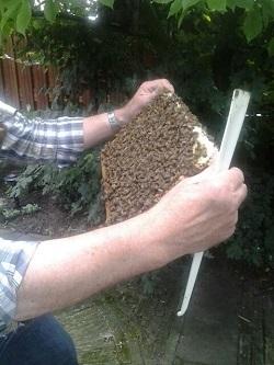 beekeeping in singapore image