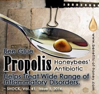 propolis drop picture image
