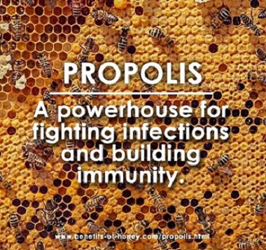 propolis for immunity picture