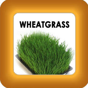 wheatgrass and honey image