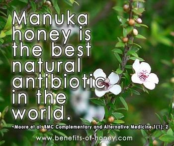 manuka as medicine image