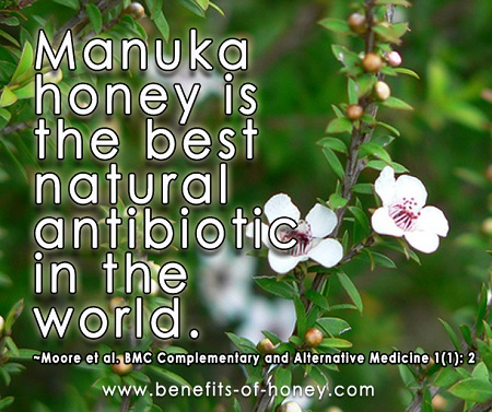 manuka honey is the best natural antibiotic image