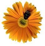natural sweetener image