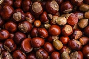 chestnut image